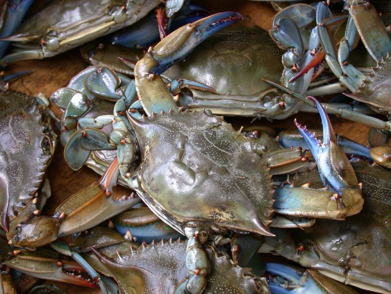 799pxblue_crab_on_market_in_piraeus